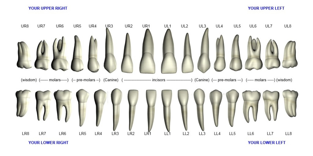 Tooth Map Affinity Dental